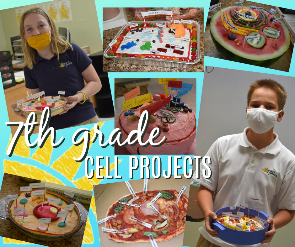 Cell Projects